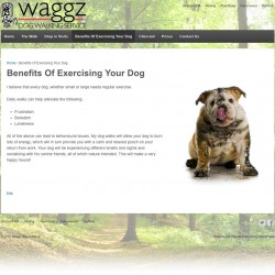 Dog Walking Service - Website build